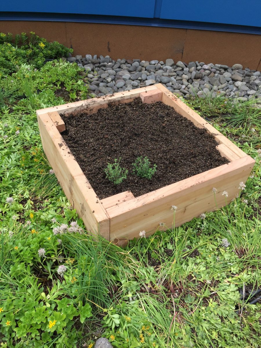The new garden beds are ready to grow vegetables and herbs!